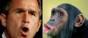 man or monkey?